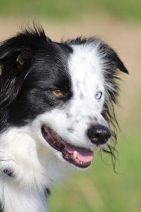 Cara at Cara Canine Physio