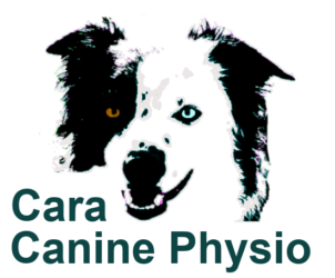 Treating your dog as I would my own | Cara Canine Physio