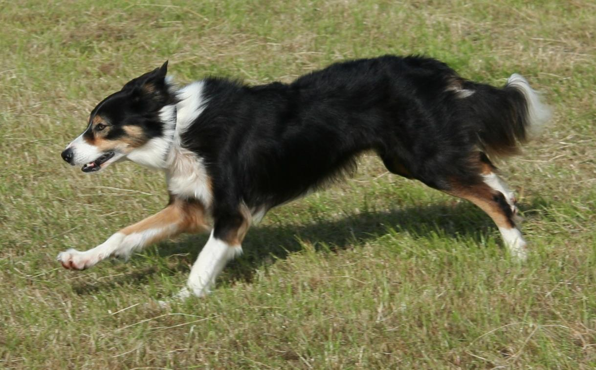 Dog Physio at Cara Canine Physio