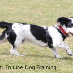 Photo credit: In Line Dog Training